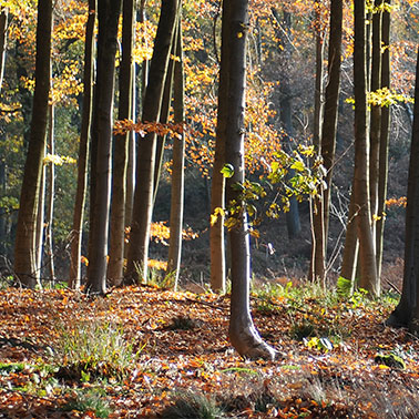 Image of a forest in autumn